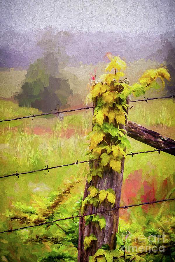 A Foggy and Rainy Autumn ap by Dan Carmichael