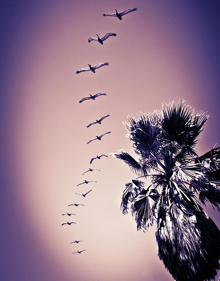 a formation seagulls flies above the beach by Kim Vermaat