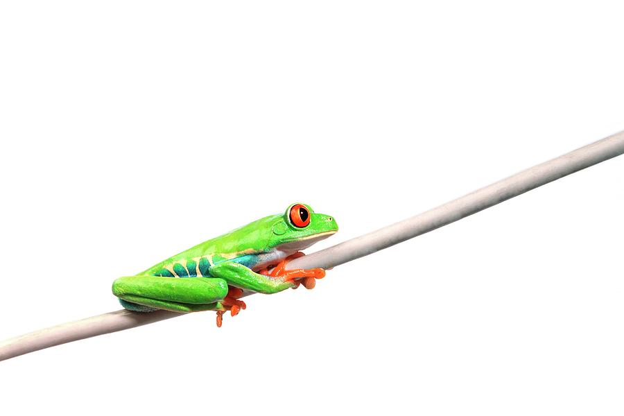 A Frog Hanging On Photograph by Design Pics/corey Hochachka