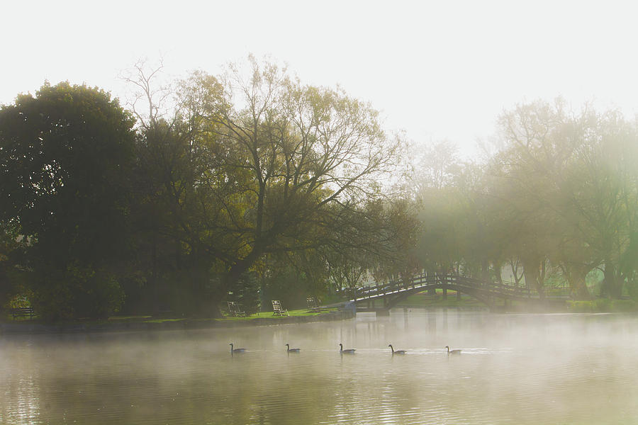 A gaggle of five on the Avon by Jay Smith