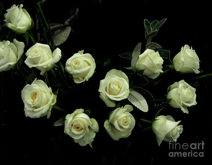 A Garland of Ivory White Roses by Joan-Violet Stretch