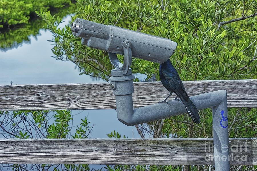 Common Grackle Looking Through Binoculars - 3962 by Marvin Reinhart