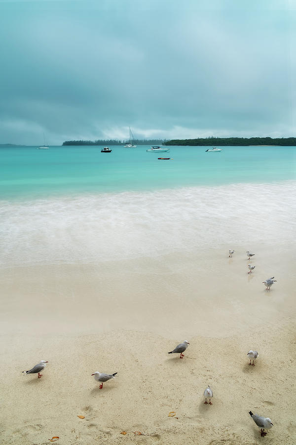 A group of seagulls on the beach at Kuto Bay by Daniela Constantinescu