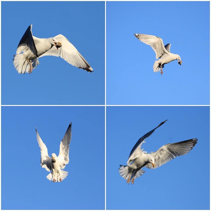 A Gull's Meal by Karen Silvestri