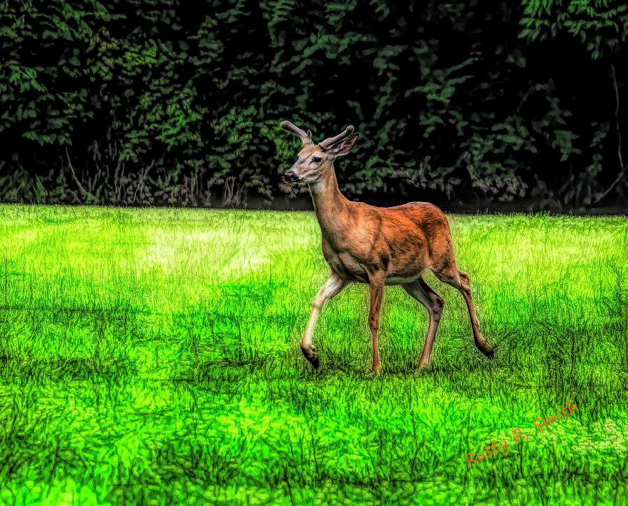 A healthy male white tailed deer with summer horns in velvet. by Rusty R Smith