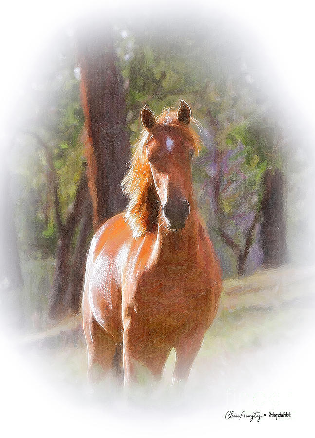 A horse by Chris Armytage