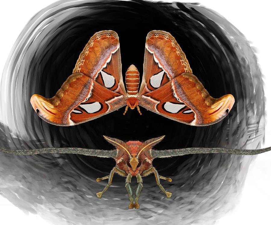 Stratton Digital Art - A Is For Atlas Moth by Joan Stratton