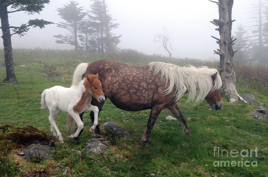 A Jaunt with Mama by Jane Axman