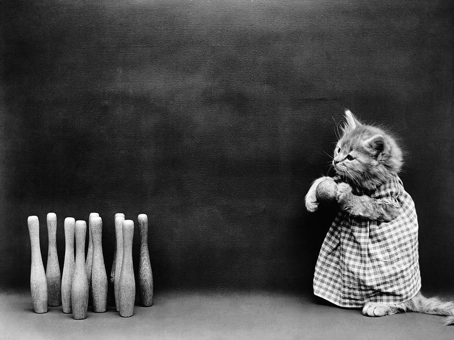 A Kitten Bowling - Harry Whittier Frees by War Is Hell Store