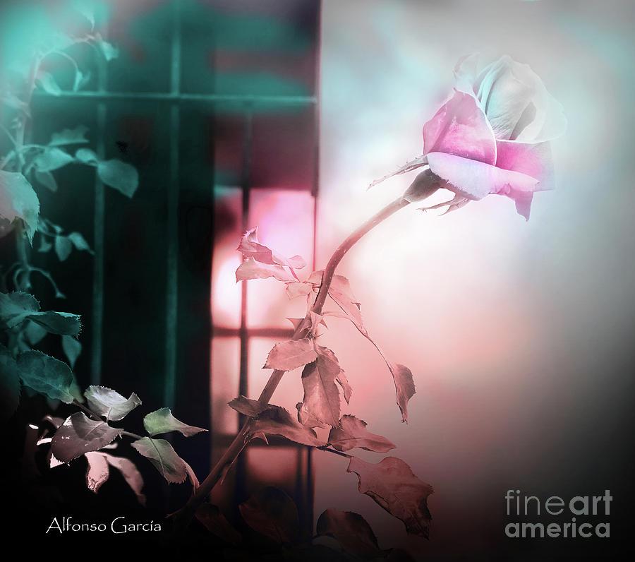 A la Ventana by Alfonso Garcia