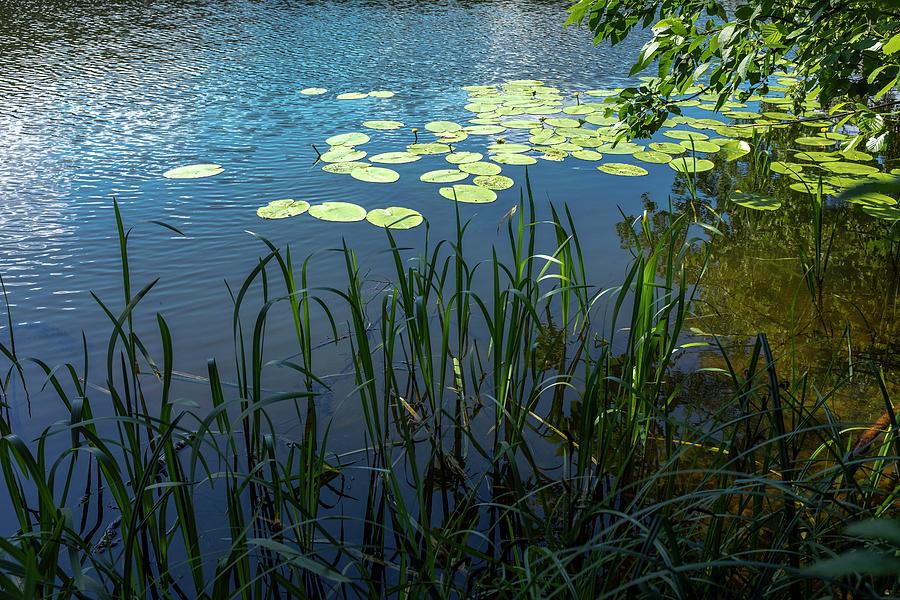 A Lake Near Sweita Lipka, Northern Poland by Dubi Roman