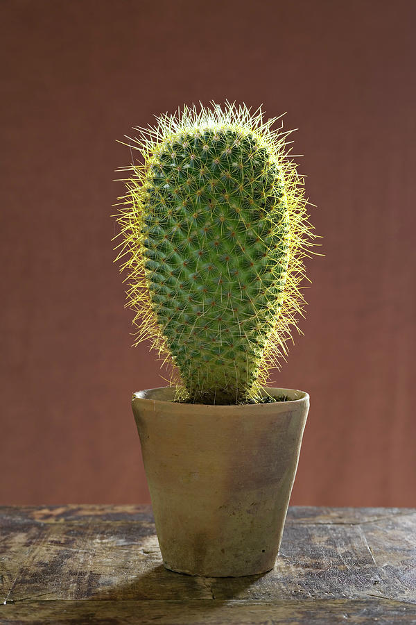 Houseplant Photograph - A Large Prickly Succulent Cactus Plant by Mint Images/ Helen Norman