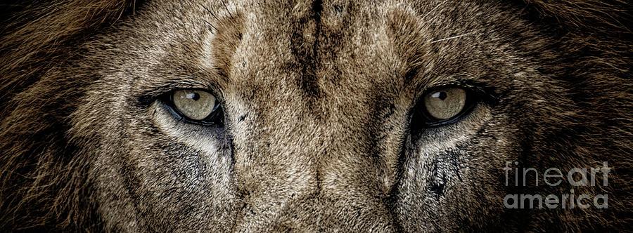 A Lion's Eye View by Julian Starks