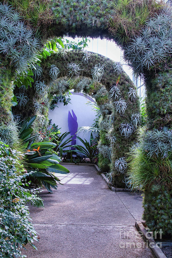 Garden Photograph - A Living Arch by Marilyn Cornwell