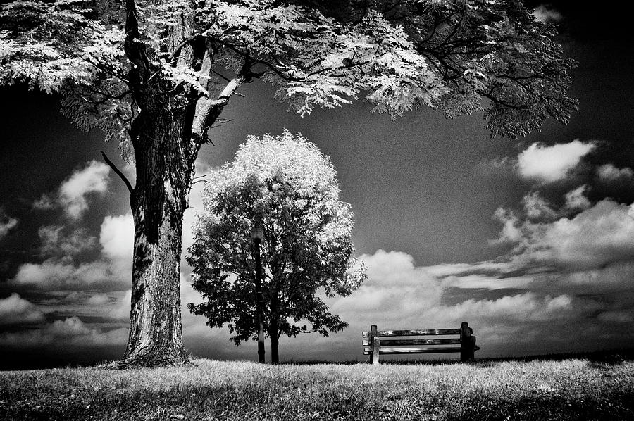 Bench Photograph - A Lone Bench Under A Tree Under A Tree by Paul W Faust - Impressions of Light