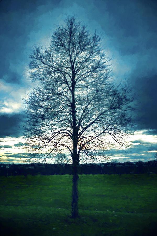 A Lone Tree in Winter by Jason Fink
