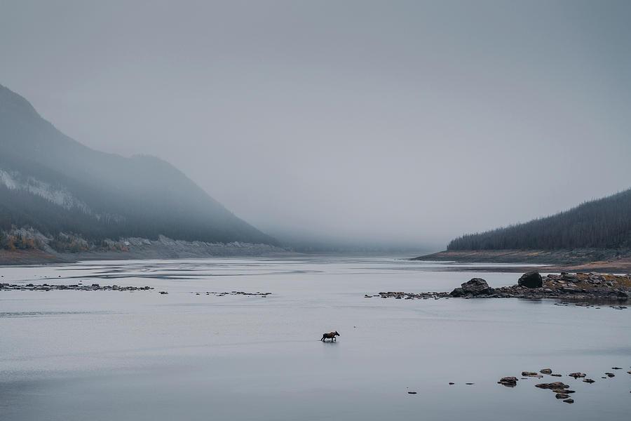A lonely moose in the Medicine Lake in Jasper National Park in Alberta by Kamran Ali