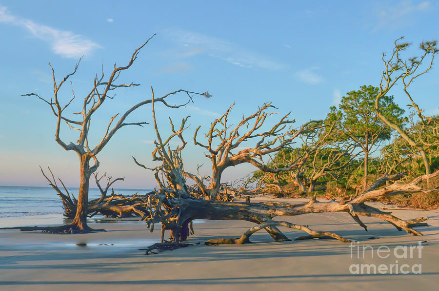 A Look Down Driftwood Beach - Jekyll Island Georgia by Kerri Farley