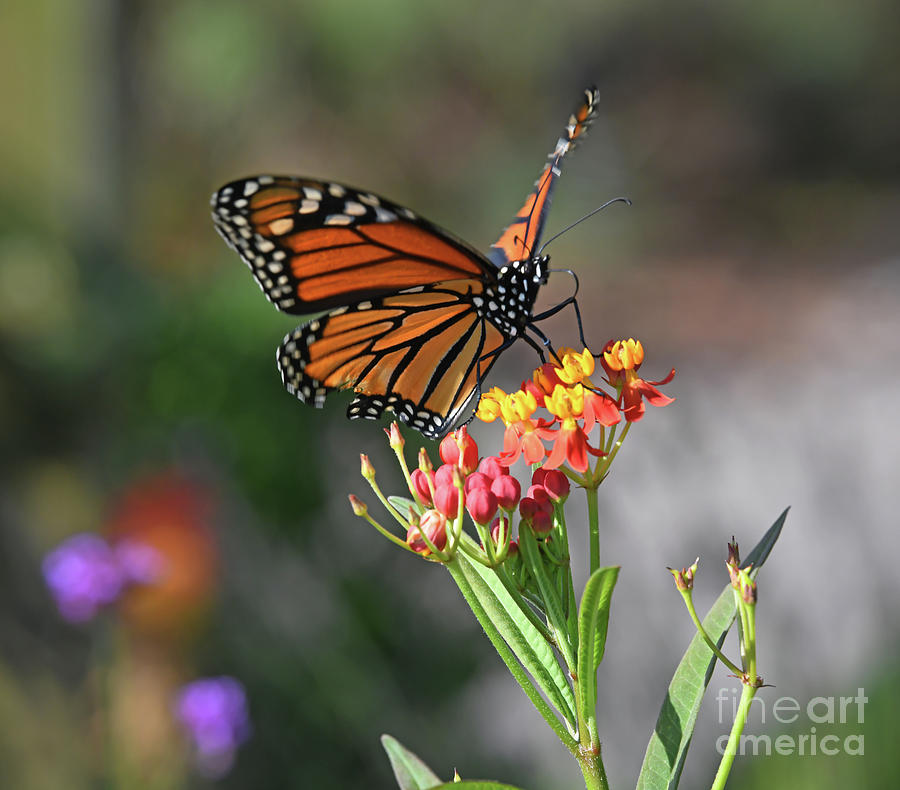 A Magical Moment with a Monarch Butterfly by Kerri Farley