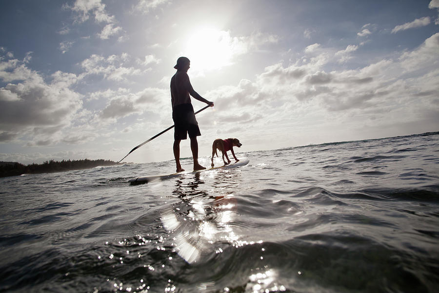 A Man And His Dog On A Stand Up Paddle Photograph by Noel Hendrickson