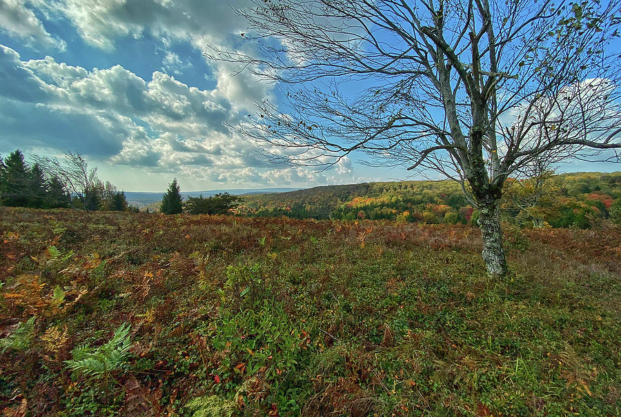 A Meadow at Dolly Sods by Lori Coleman