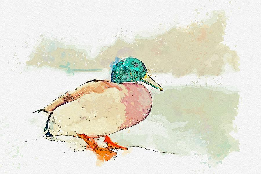 Duck Painting - A Migrating Loon, Oslo, Norway -  Watercolor By Adam Asar by Adam Asar