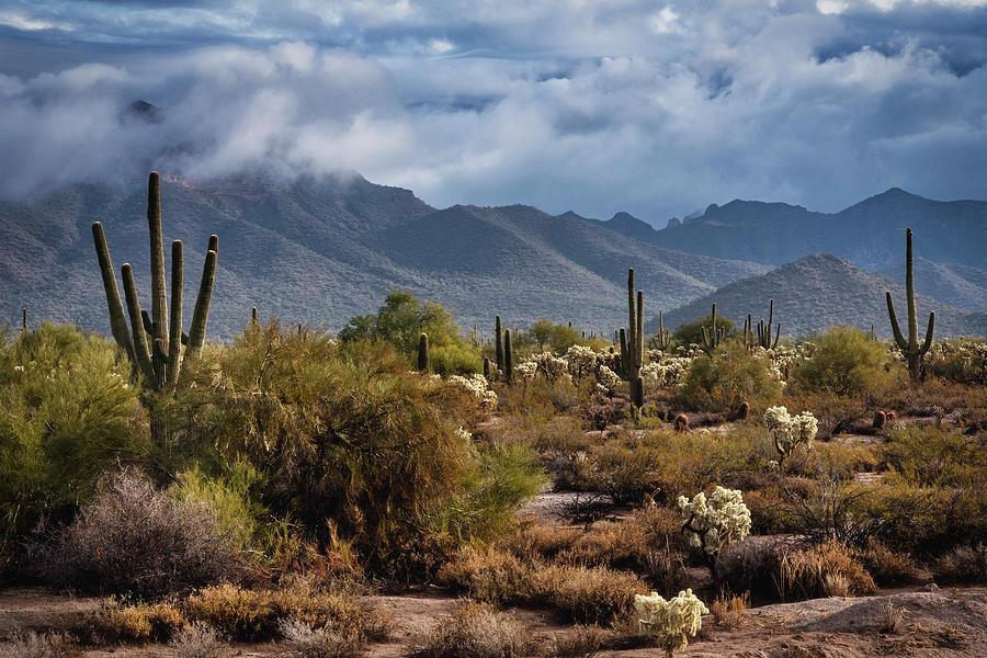 A Misty Winter Morning In The Sonoran  by Saija Lehtonen