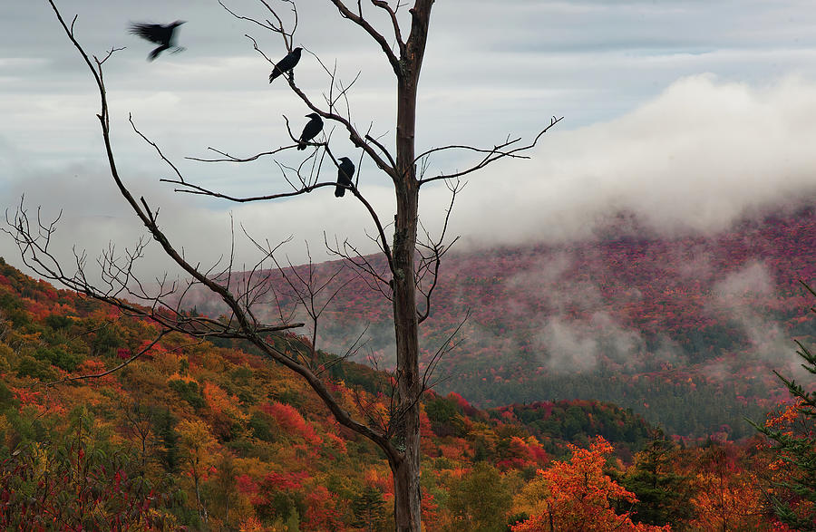 A Murder of Crows gathering over Lost river road by Jeff Folger