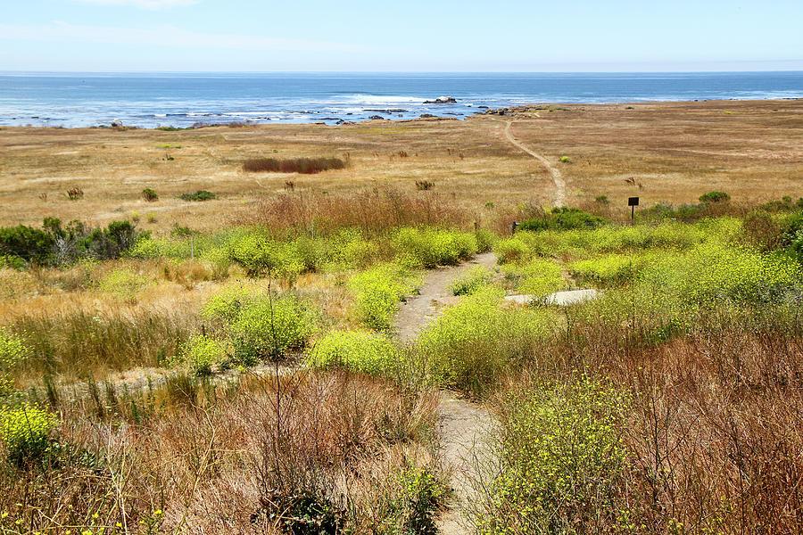 Blue Sky Photograph - A Narrow Footpath Towards The Ocean by Susan Pease