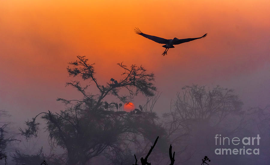 Sunrise Digital Art - A New Year Begins by Pravine Chester