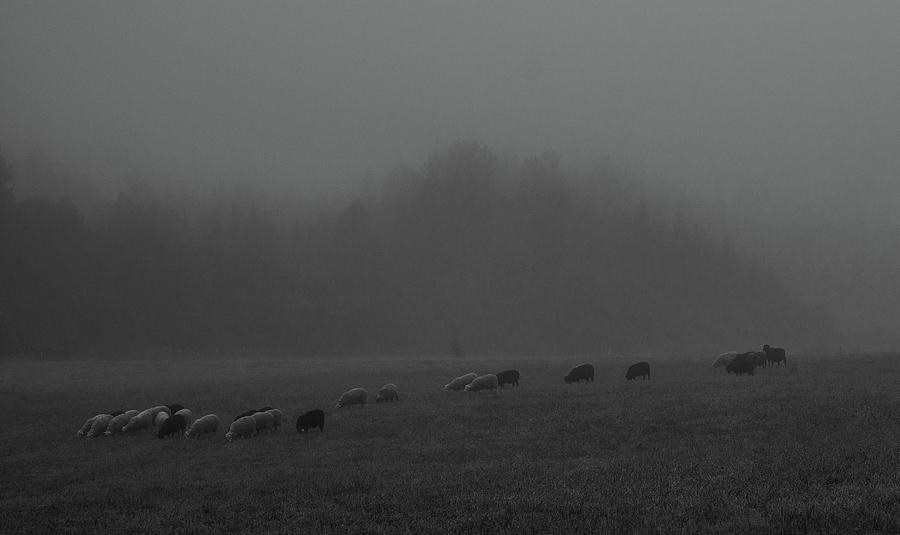 A Nocturnal Pastorale by Pekka Sammallahti