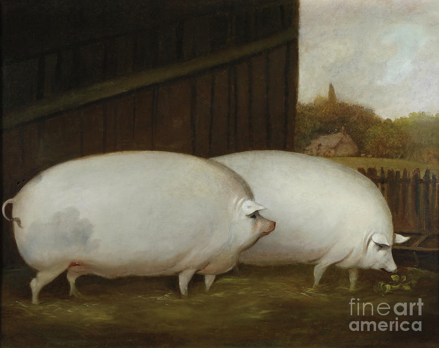 English Painting - A Pair Of Pigs by English School