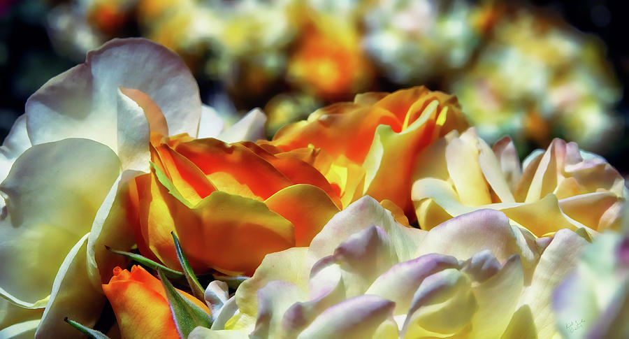 Rose Photograph - A Pantheon Of Roses by Rick Lawler
