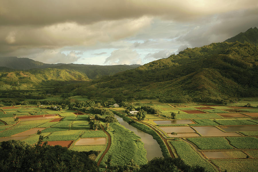 A Patchwork Of Farm Plots In Hawaii Photograph by Michael Sugrue