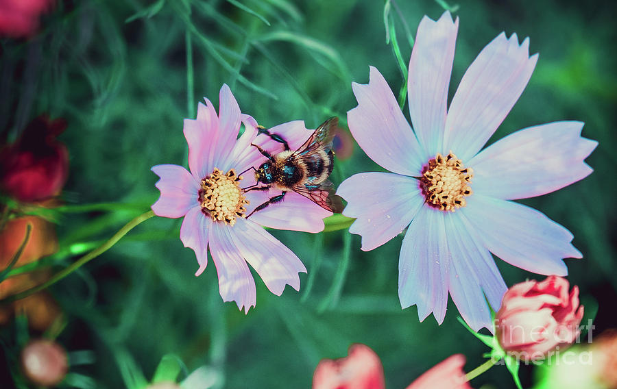 A Peaceful Place. Flower Photograph by Stephen Geisel