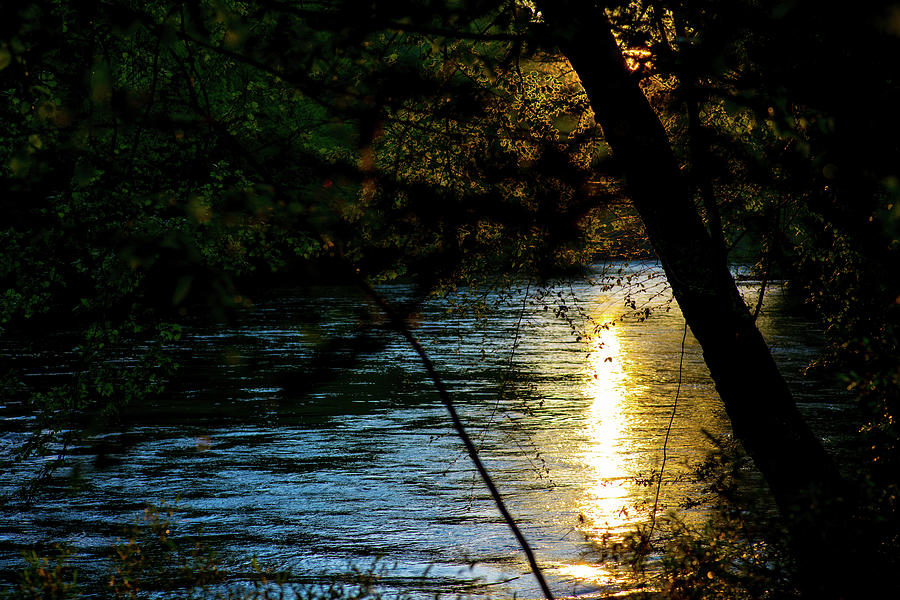 A Peek Through the Trees by James-Allen