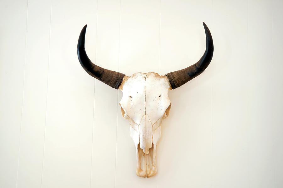 A Picture Of An Animal Skull On A White Photograph by Philary