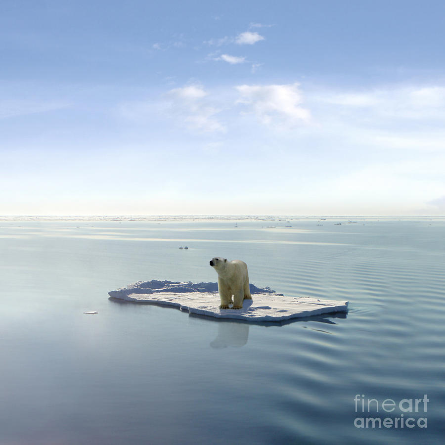 Polar Photograph - A Polar Bear Managed To Get On One by Jan Martin Will