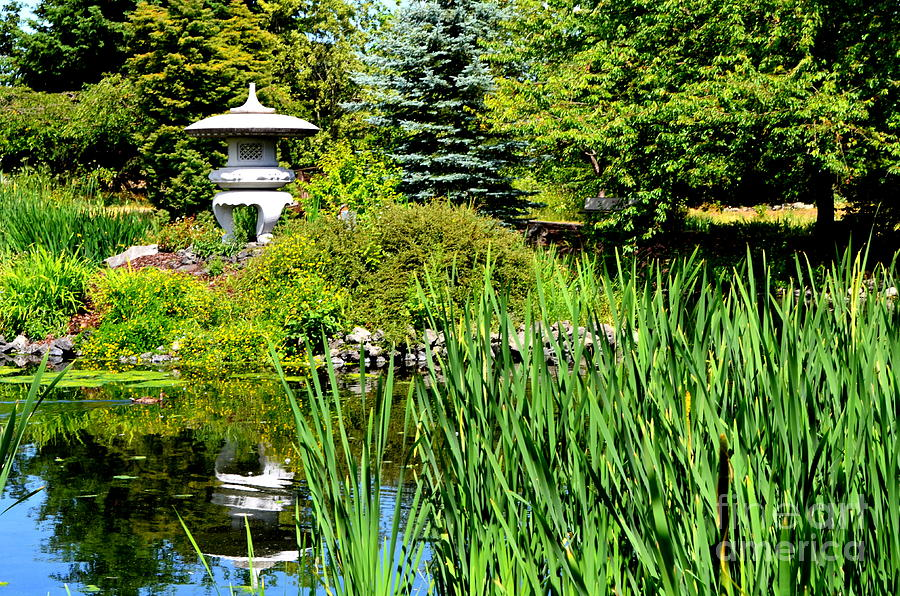 A Pond In Sequim by Mary Deal