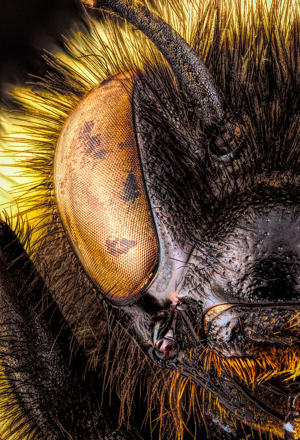 A Portrait of a Bumble Bee by Brian Caldwell