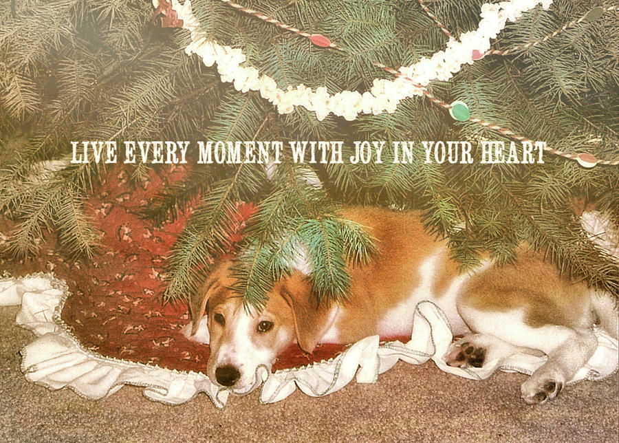 Puppy Photograph - A Puppy For Christmas Quote by JAMART Photography
