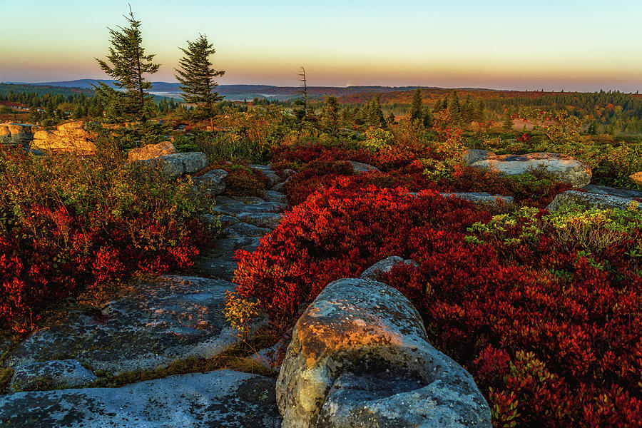 A Rainbow of Fall Color at Dolly Sods by Lori Coleman