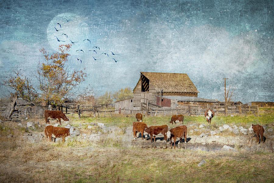 A Ranchers Dream by Ramona Murdock