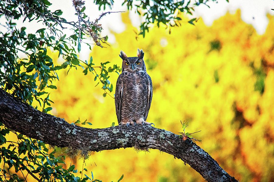 A Real Hoot by Lynn Bauer