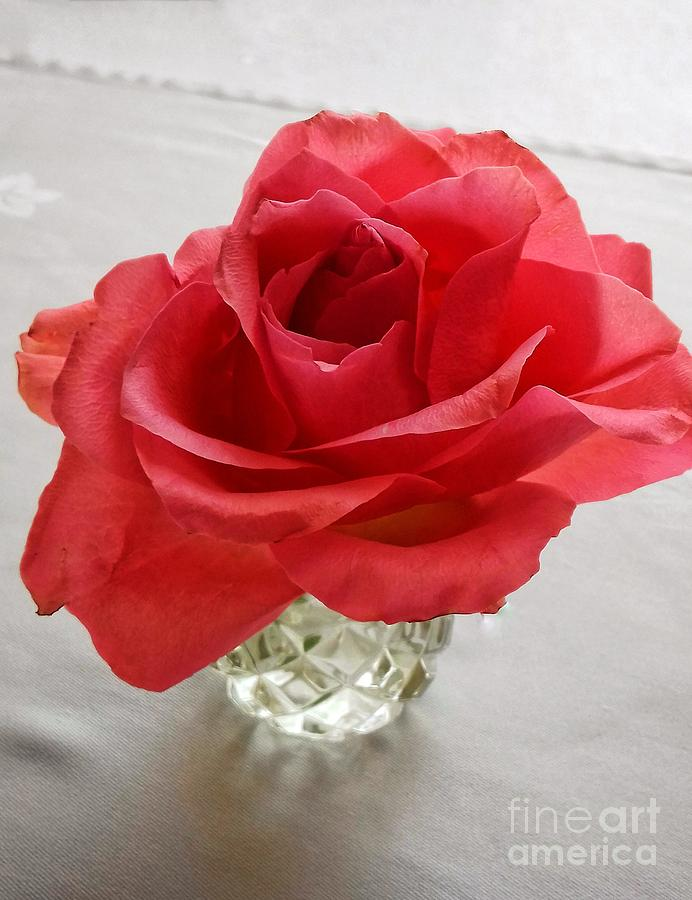 A red Rose and Crystal by Joan-Violet Stretch