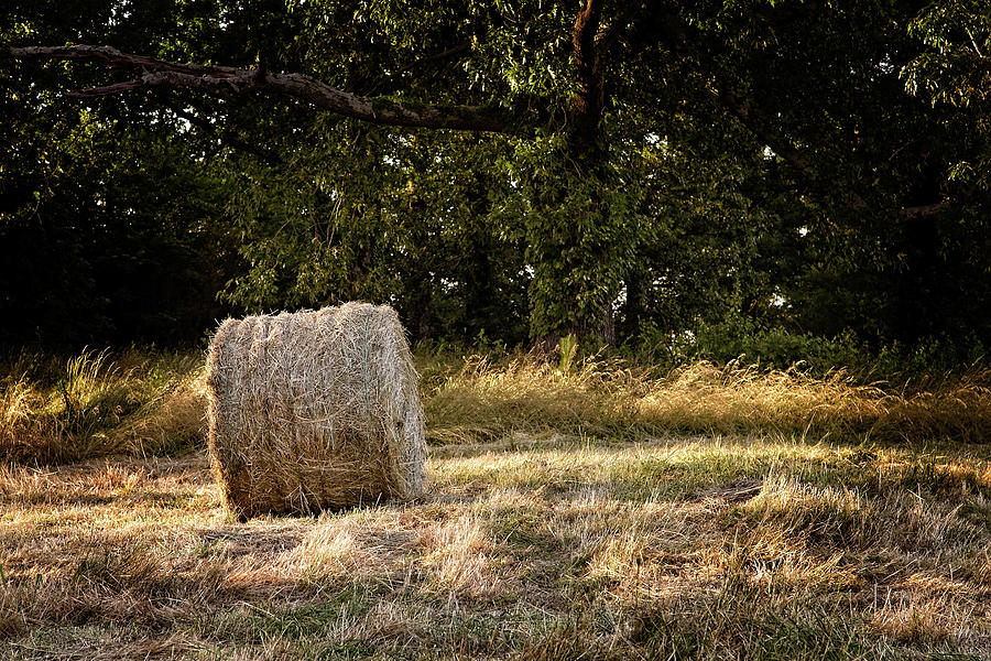 A roll of hay next to a wooded area by Darryl Brooks