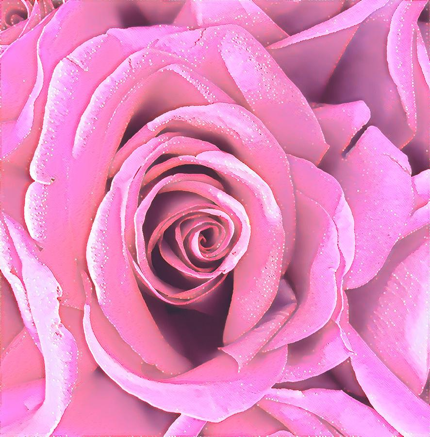A Rose is a Rose is a Rose in Pink by Joalene Young