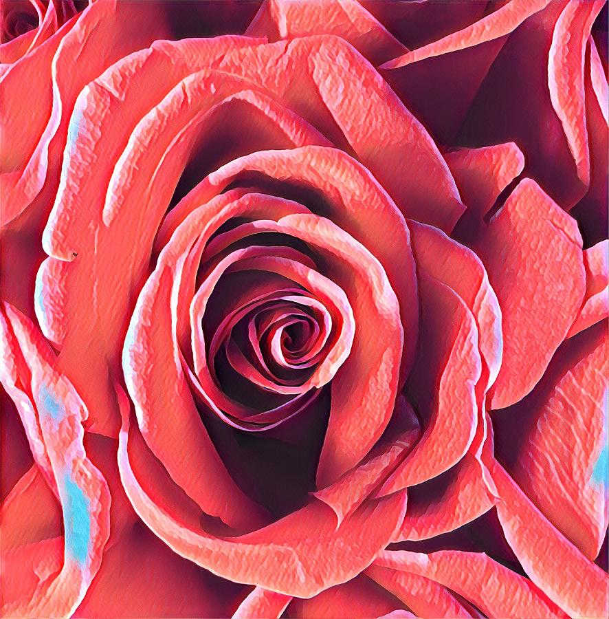 A Rose is a Rose is a Rose by Joalene Young
