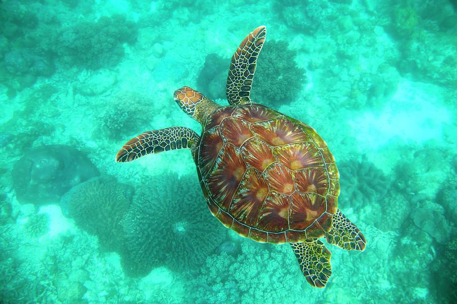 A Sea Turtle Swims Underwater In The Photograph by Sean White / Design Pics