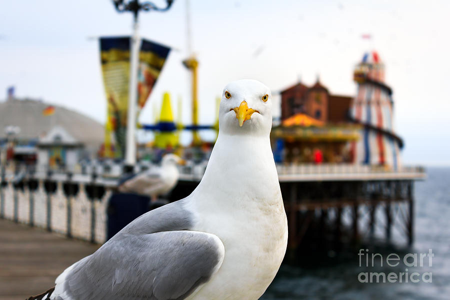 Funfair Photograph - A Seagull At Brighton, Uk. Shallow by Bobo Ling